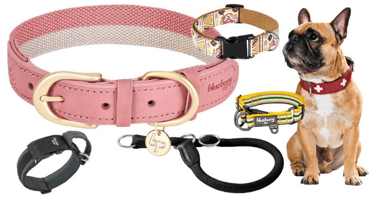 best Dog Collars